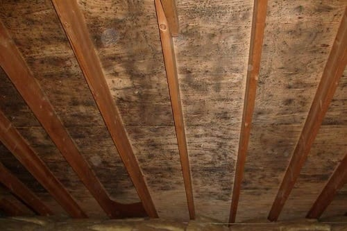 Mold in Attic Humidity Increased