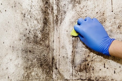Bathroom mold removal how to get rid of bathroom mold - How to get rid of surface mold in bathroom ...