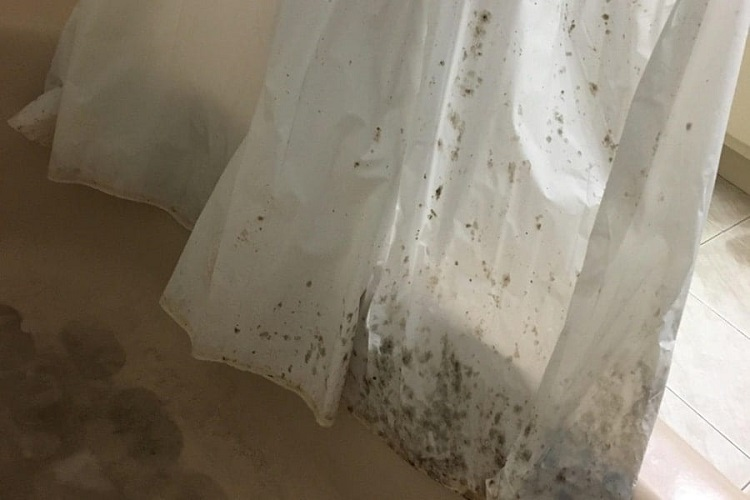HOW TO GET MOLD OFF SHOWER CURTAIN INDOORS