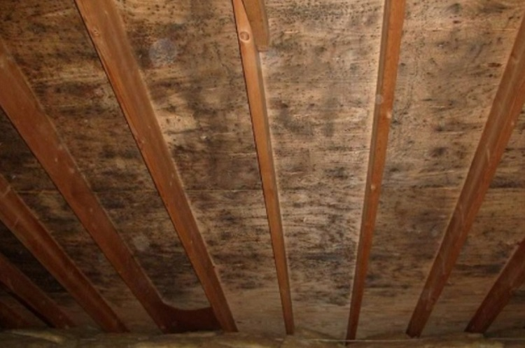 Causes Of Attic Mold