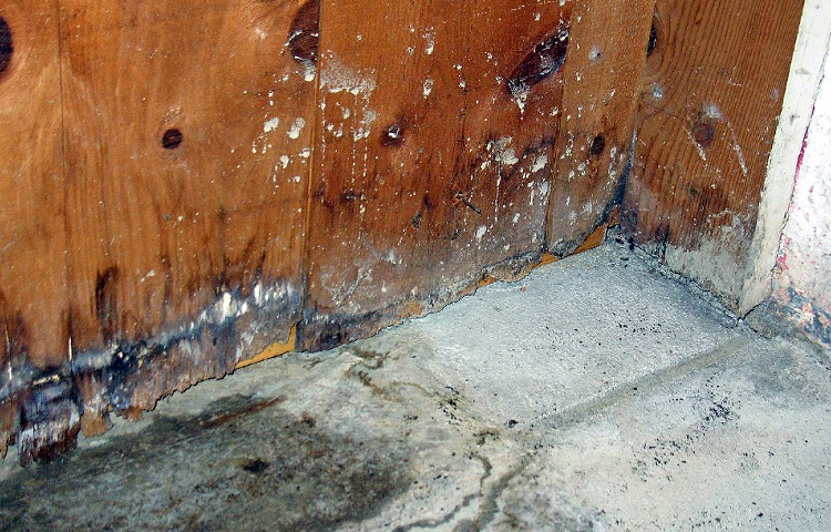 Common Types Of Basement Mold