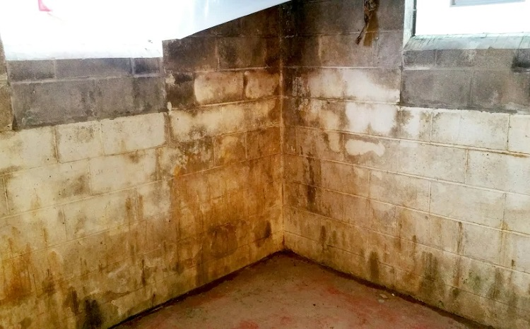 Poorly Ventilated Basment With Mold