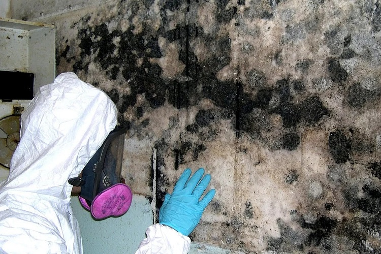 Basement Mold Removal Cost
