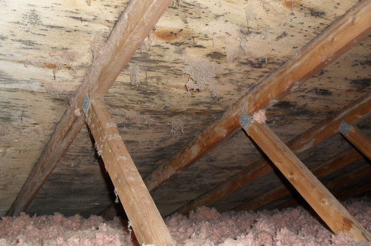 WHERE TO LOOK FOR MOLD IN YOUR HOME