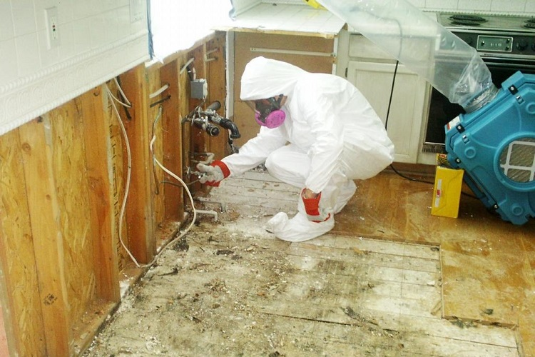 MOLD REMEDIATION SERVICES – MOLD REMOVAL COMPANIES