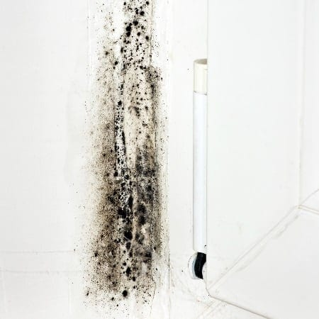 Black Mold In Walls what is black mold : what does black mold look like