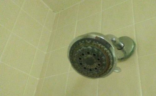 Black Mold Shower Head in the Shower