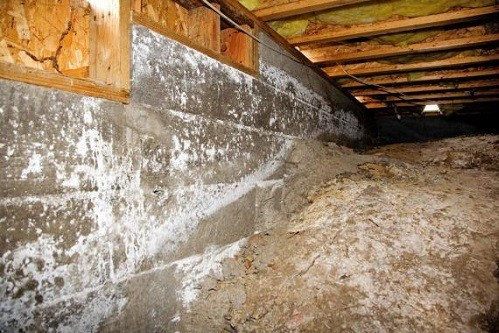 Crawl Space Mold Problems