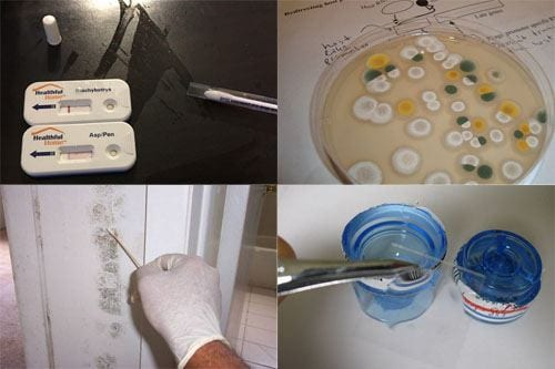 Types of Mold Tests Bacteria