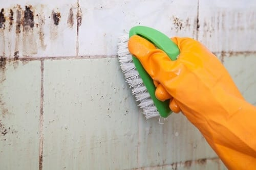 Using a brush and bleach to kill mold