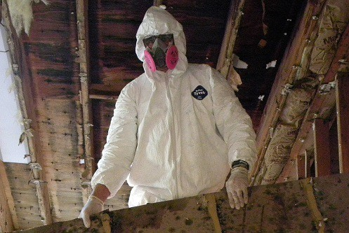 Mold Removal Gear For Working