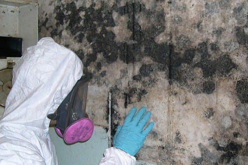 Black Mold Removal Professional