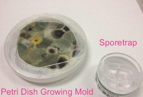 Mold Spore Trap