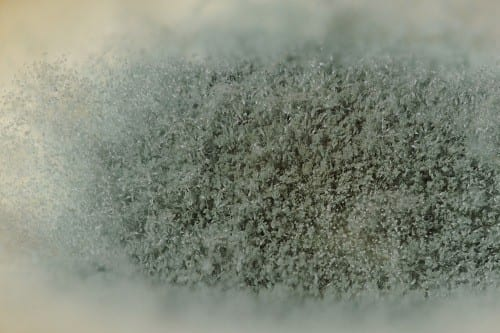 how to clean up mold in basement