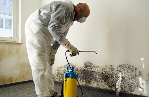 Professional Mold Removal in a House