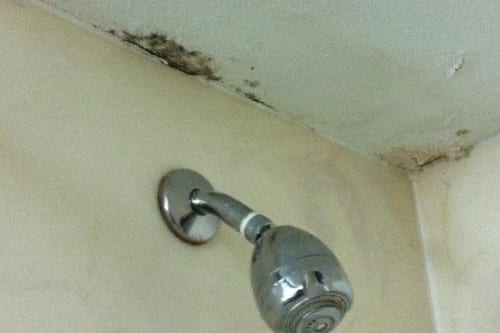Mold in the Shower