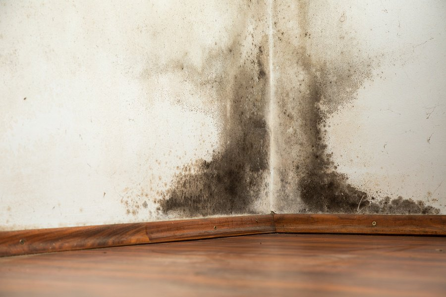 How to remove black mold from walls - How to clean black mold in bathroom ...