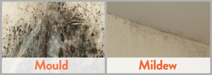 Difference betwen Mold vs Mildew