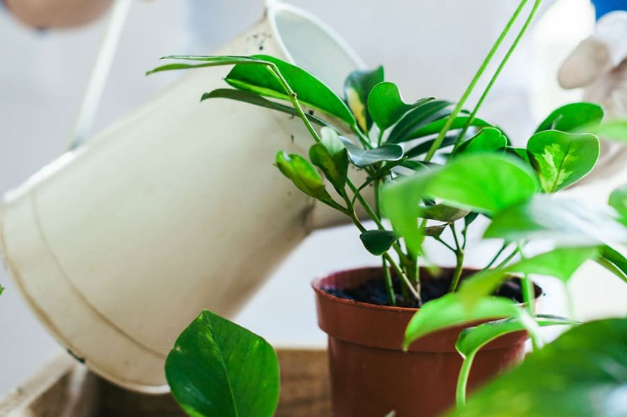 How To Get Rid Of Mold On Plants: Plant Mold Removal