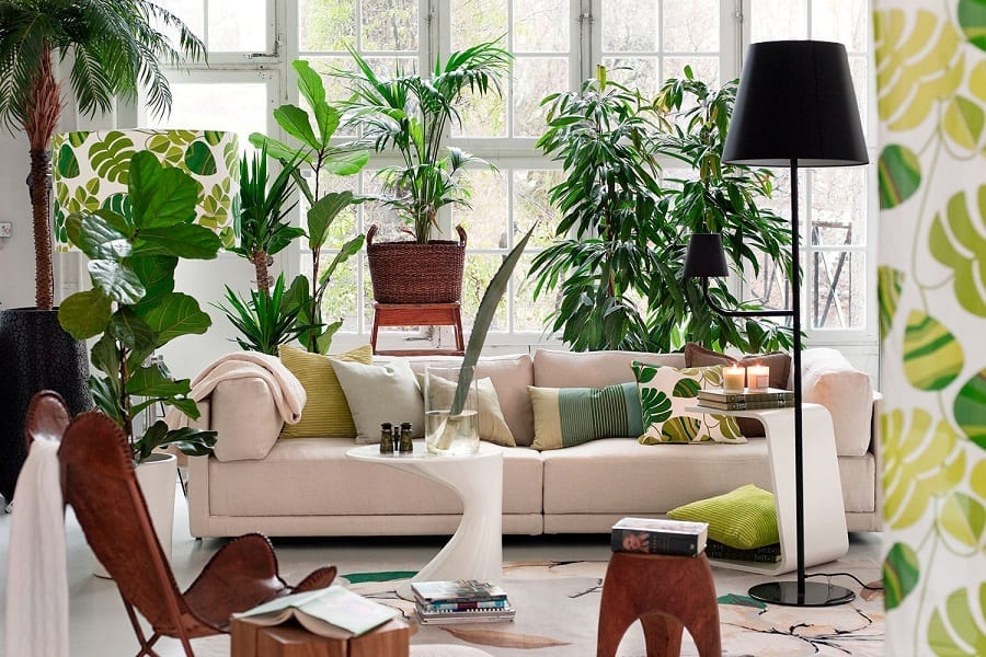 Indoor plants for mold removal