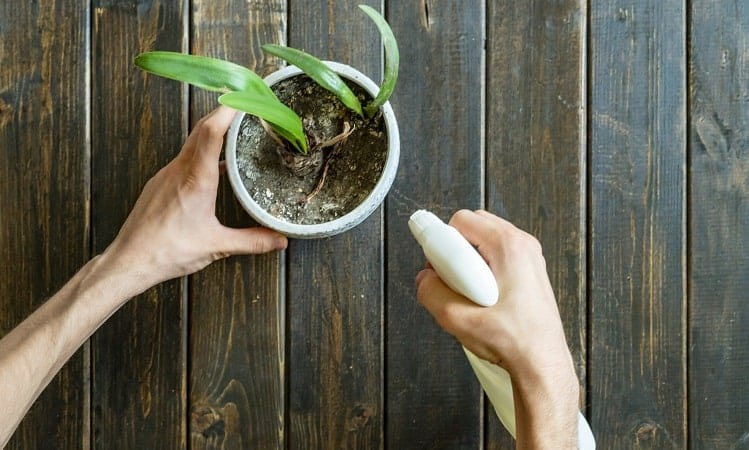 Remove Mold From House Plants