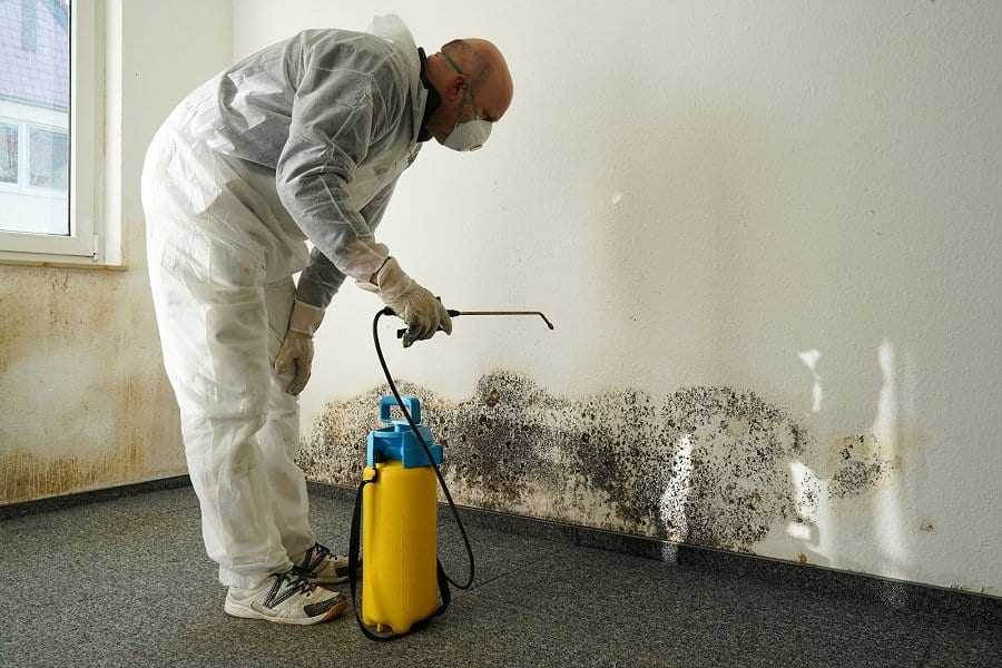 What is Black Mold : What does Black Mold Look Like