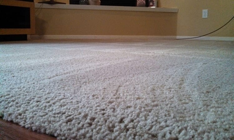 getting rid of carpet mold