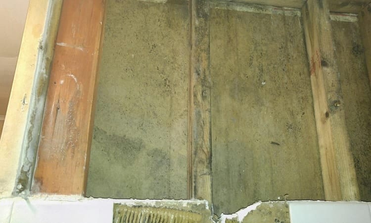 green mold on wood example