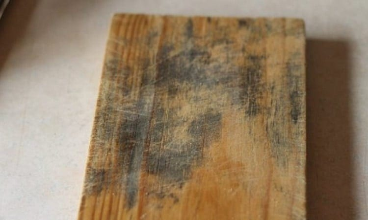 mold on wood example