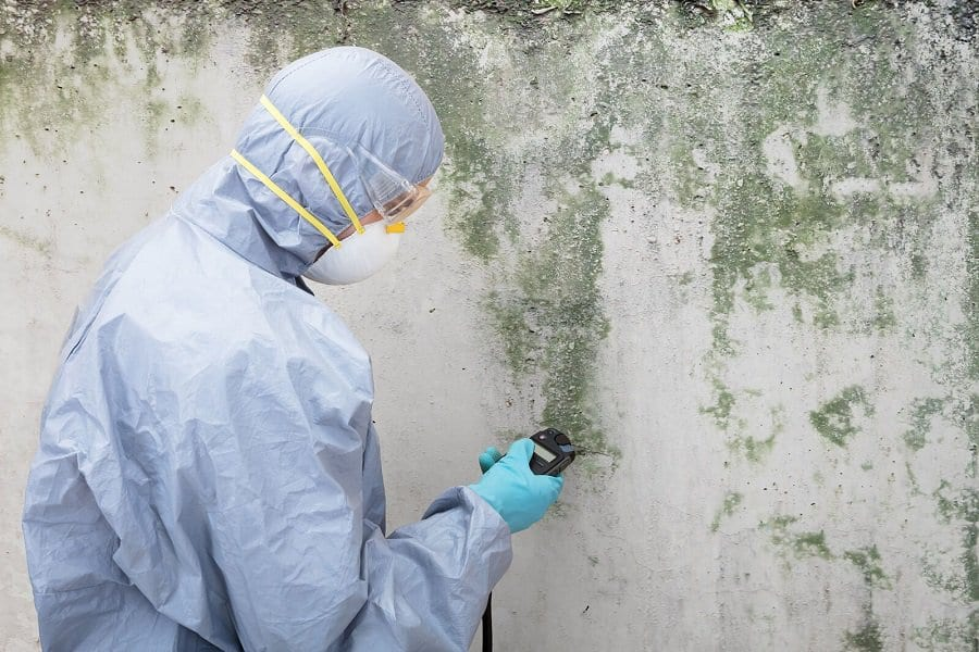 mold remediation testing