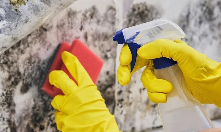 tools for mold removal