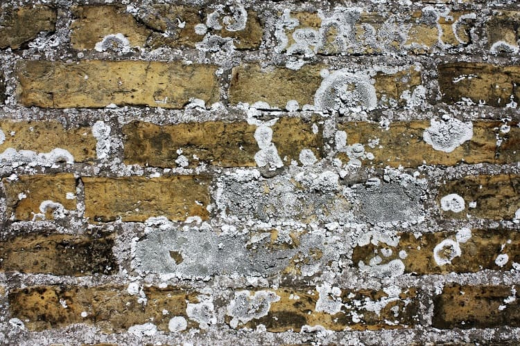 I've Got White Mold On My Brick Fireplace - How To Get Rid Of It