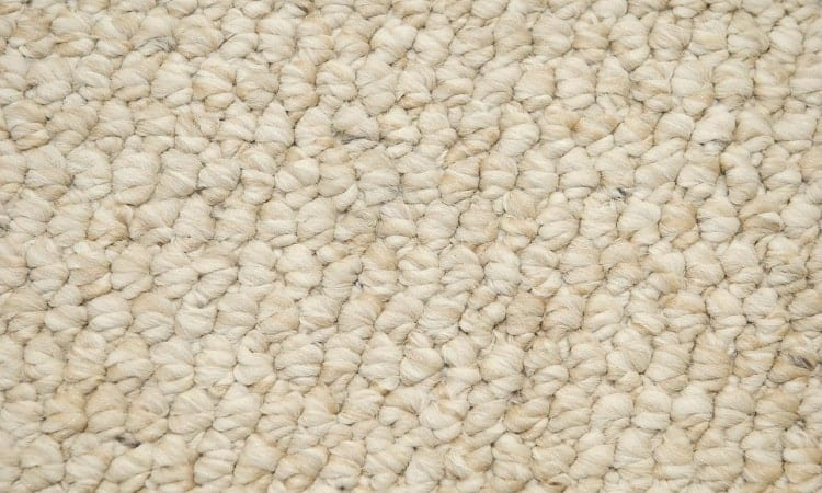 olefin mold resistant carpets
