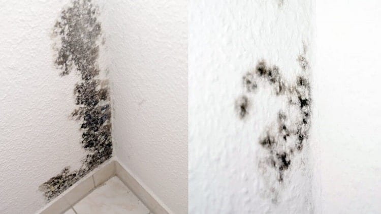 What Happens If I Paint Over Mold?