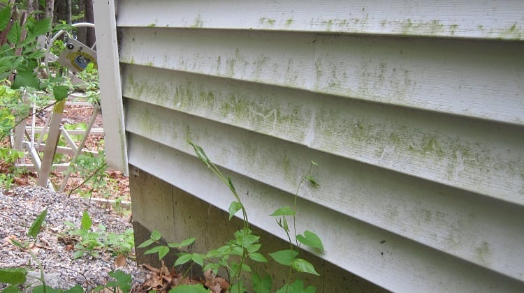 Causes of Mold Growth on Vinyl Siding