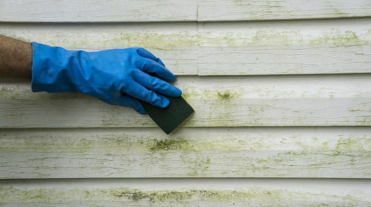 Cleaning siding with a disinfectant