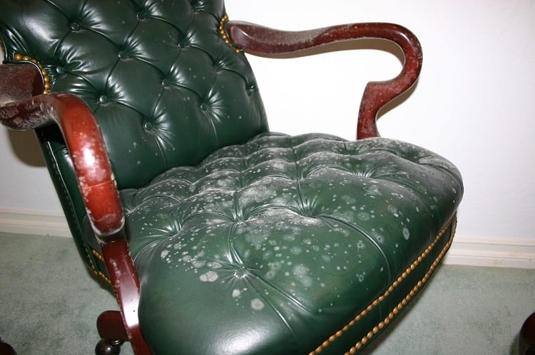 What causes Mold on Leather
