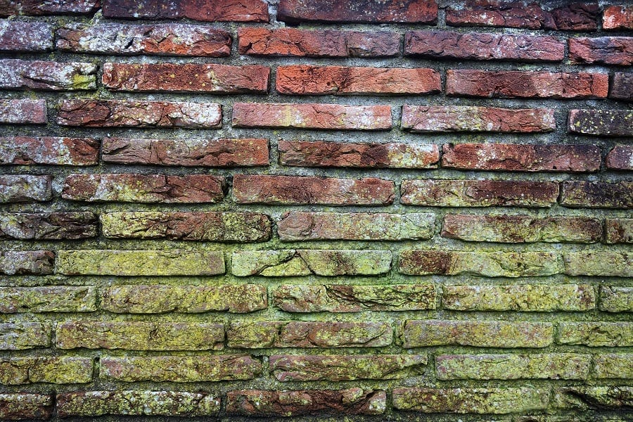 5 Natural Ways to Clean & Remove Mold From Bricks