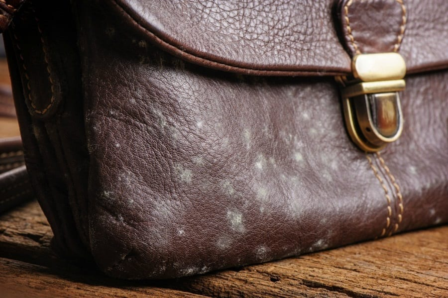 How to Remove Mold from Leather