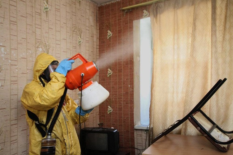 What is the average cost of mold removal from my home?