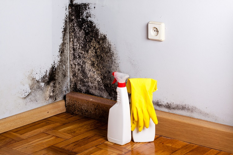 HOW TO GET RID OF BLACK MOLD WITH BLEACH