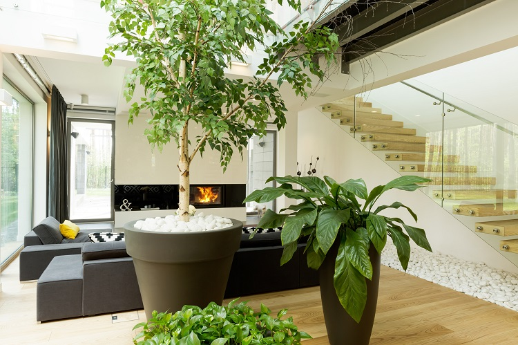 Plants Can Help to Remove Moisture and Humidity in Your Home