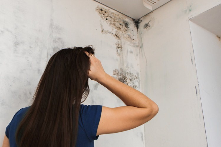 What Does Black Mold Look Like?