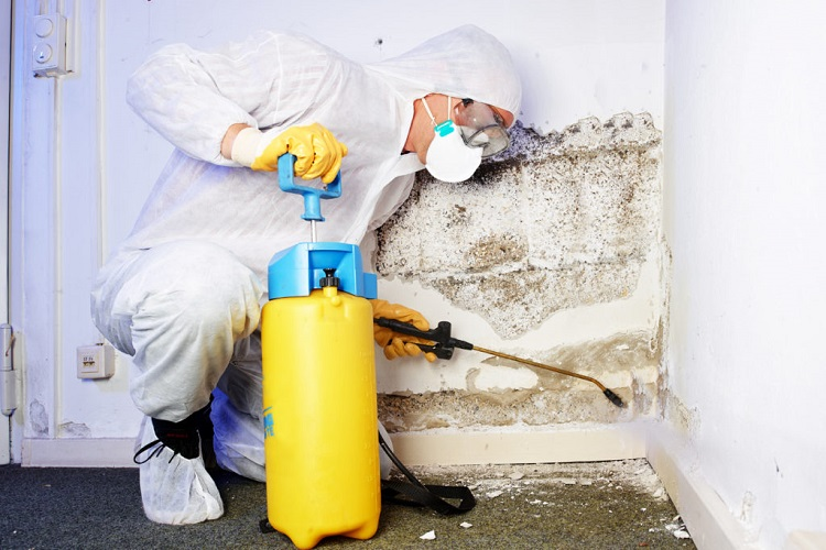 Is Mold Remediation Expensive?