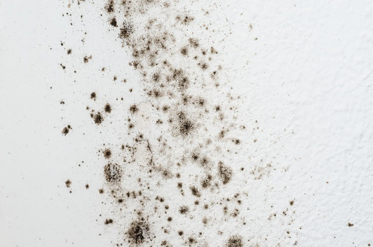 How Mold And Mildew Spores Contribute to Poor Indoor Air Quality