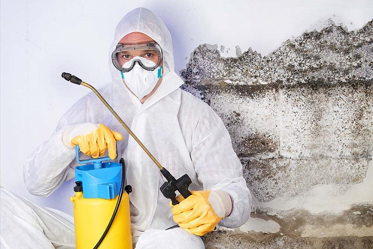 How To Test For Black Mold