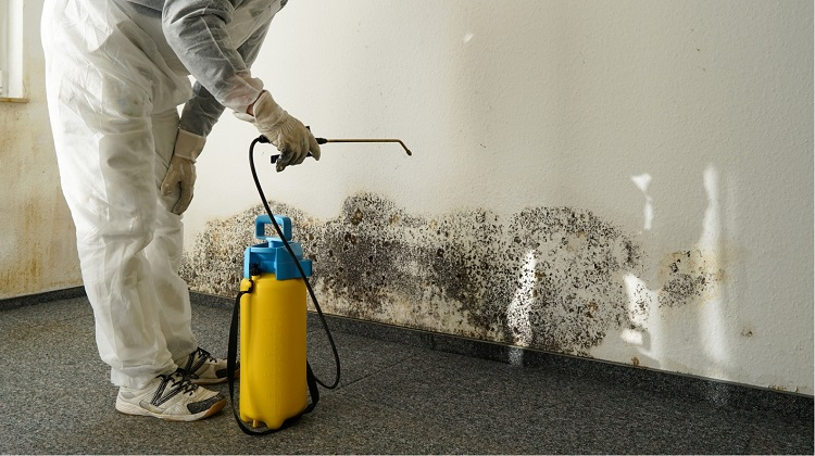What Questions Should I Ask A Mold Testing Company?