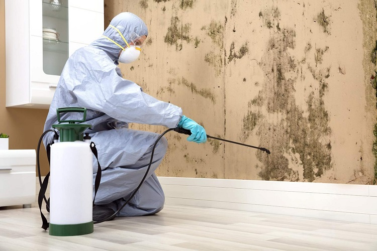 Will my homeowner's insurance pay for the cost of mold remediation